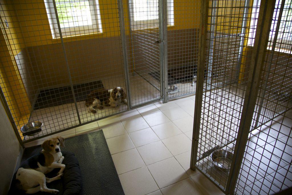 la pièce des chiens adjacente à la cuisine